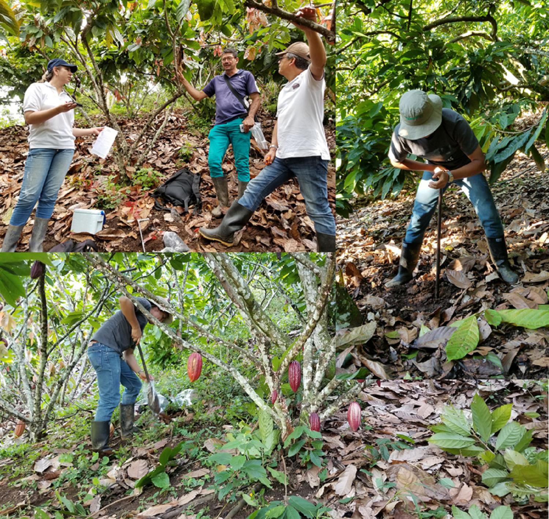 Muestreo de cadmio-Tolima-Colombia