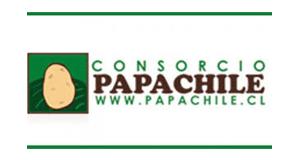 Consorcio Papa - Chile