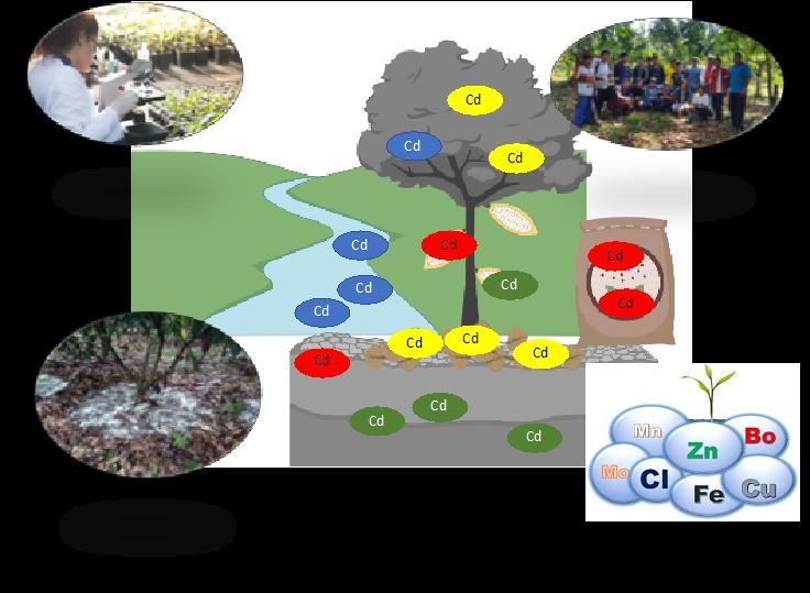 Descripción gráfica del problema y los componentes de la plataforma para aportar a la solución