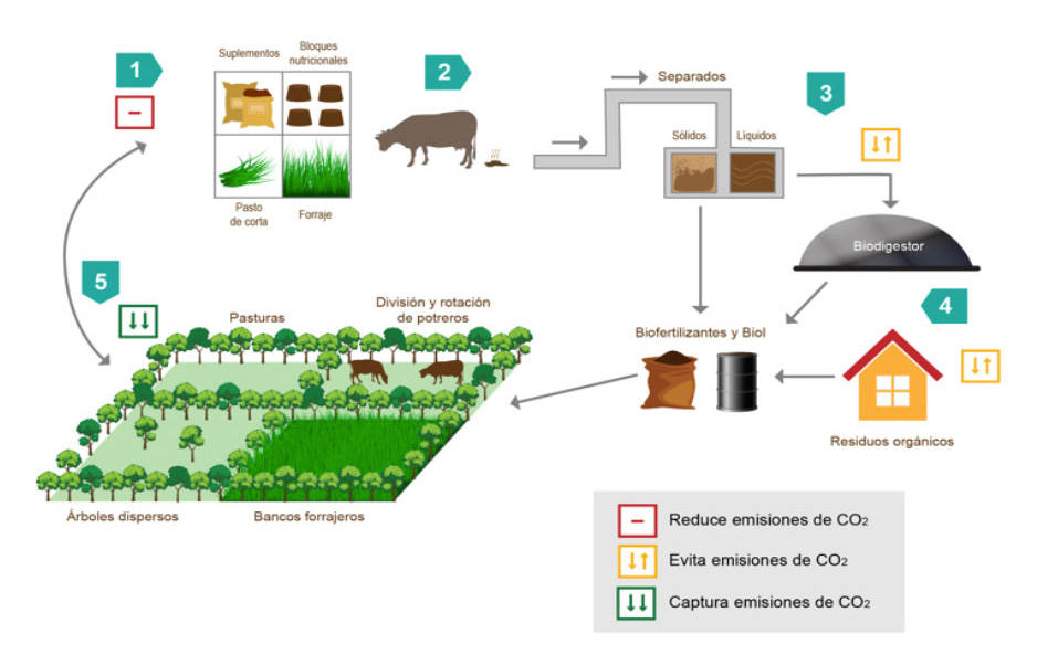 Better management practices and silvopastoral systems