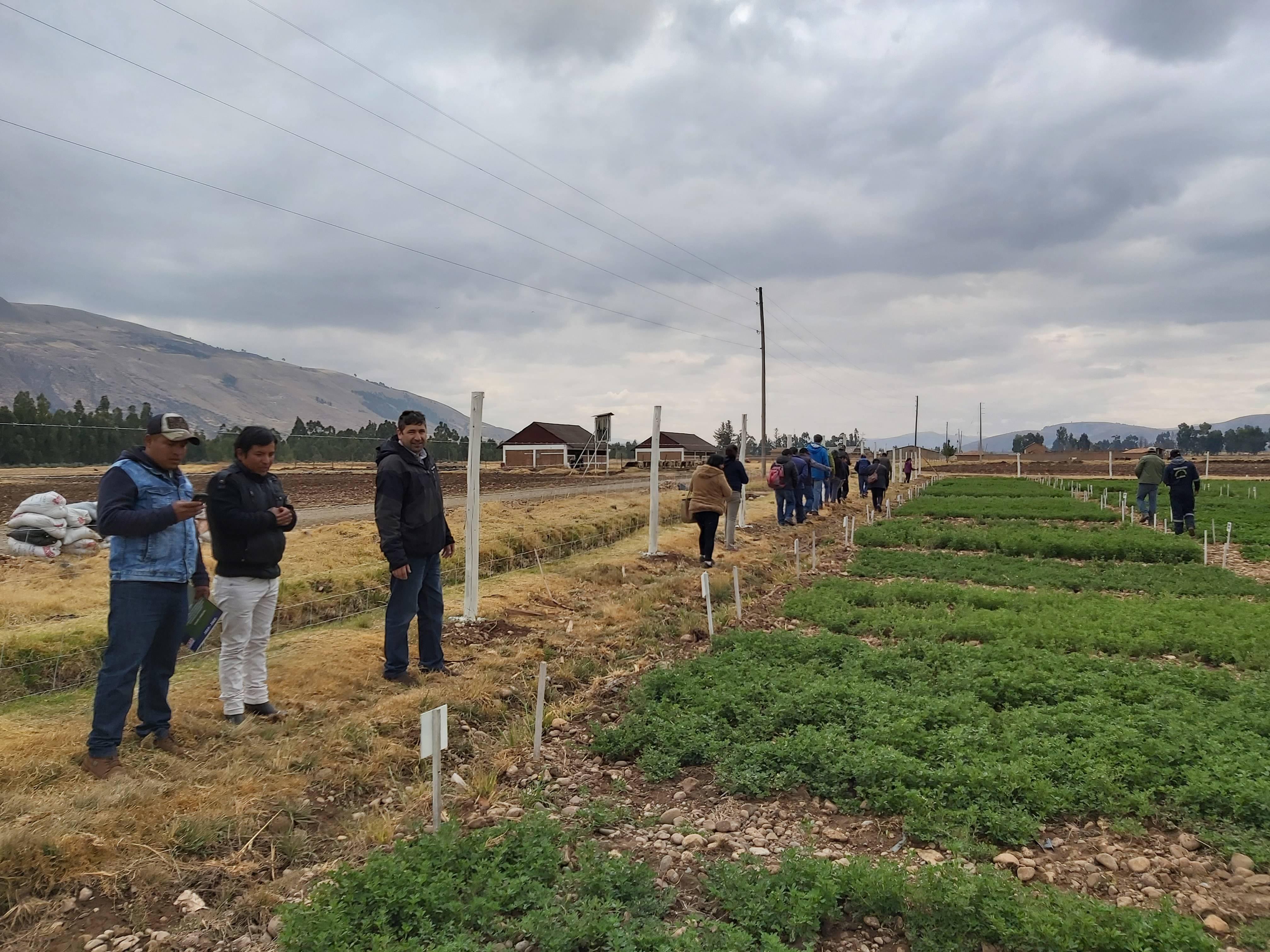 Evaluación de cultivares