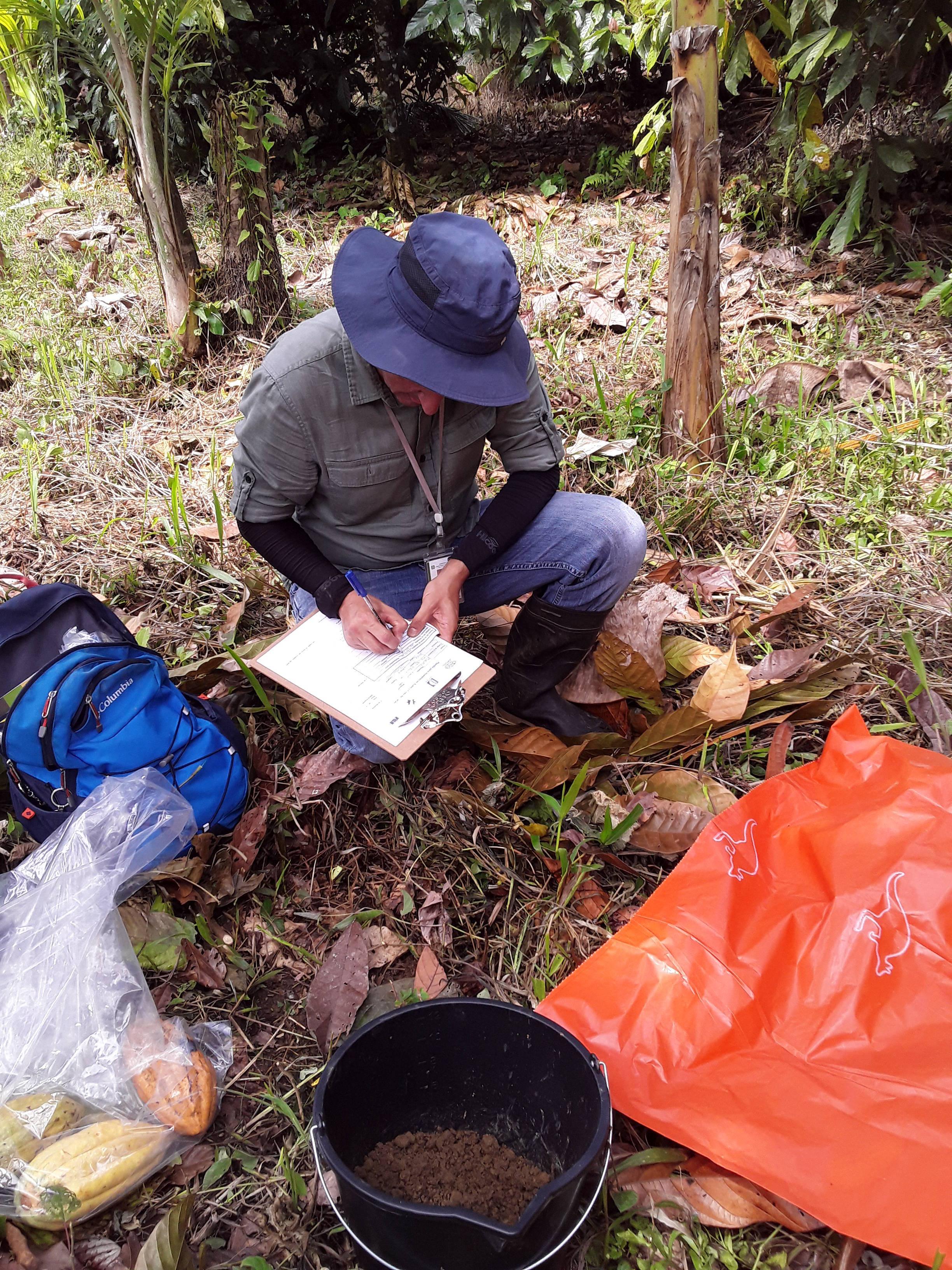 Recolección de muestras de suelo, fruto y hojas de cacao.