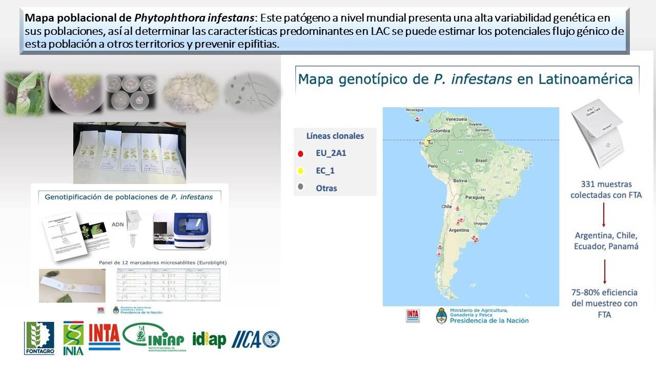 Resultado: Monitoreo de P.infestans