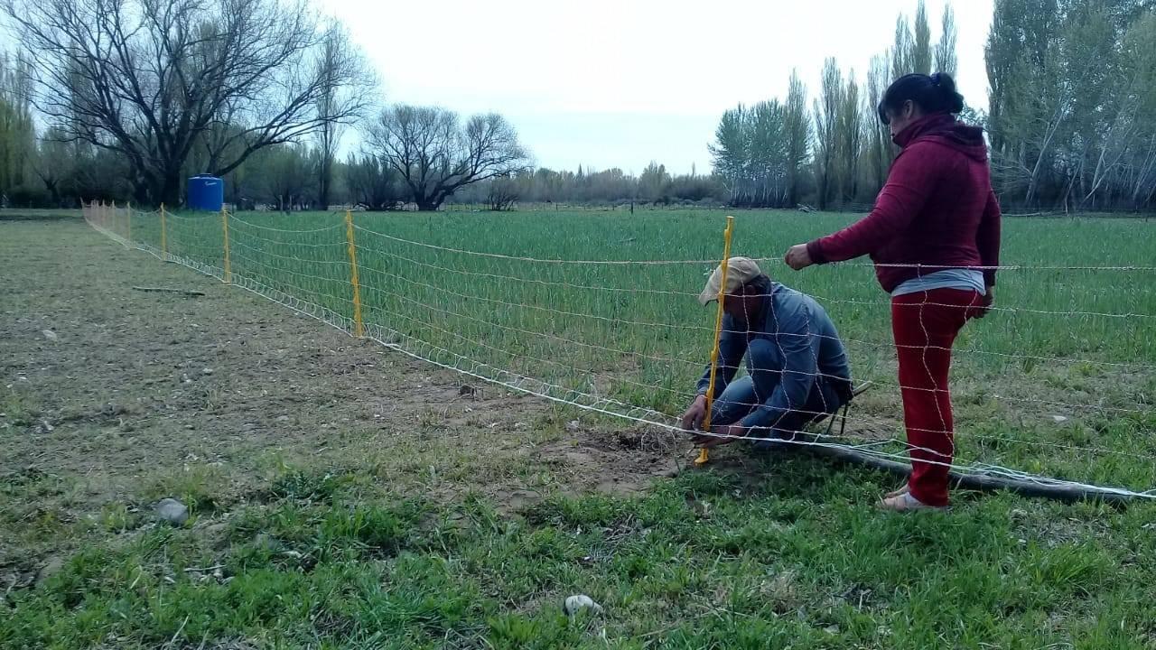 Manejo del pastoreo con cerco eléctrico, productores familiares de Neuquén, Argentina