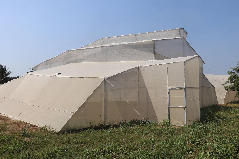 Invernadero construido en el centro de investigación Caribia AGROSAVIA - COLOMBIA