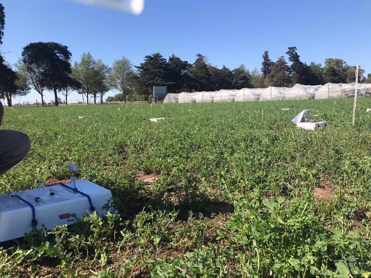 Ensayo de  emisiones de óxido nitroso en pasturas de alfalfa. Córdoba, Argentina