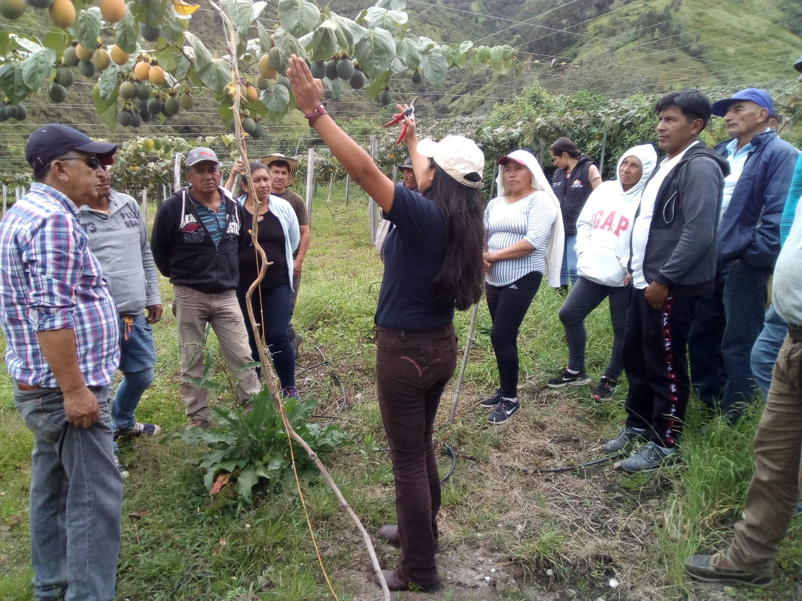 Dia de campo productores granadilla