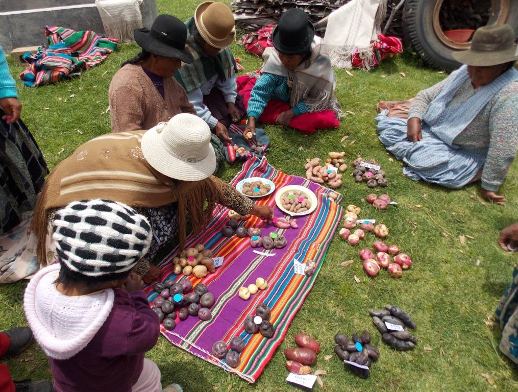 Identificación de variedades de papa nativa de acuerdo a preferencias culinarias, gastronómicas, usos y costumbres y por la conservación de la biodiversidad existente en la región (Comunidades circundantes al lago Titicaca de Perú y Bolivia).