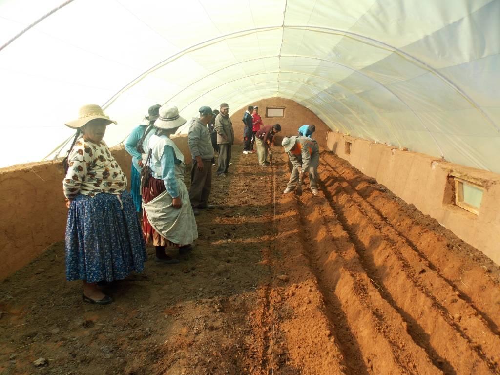 Preparación de camellones por estudiantes, profesores y padres de familia (Junta Escolar), para siembra directa o trasplante de hortalizas en el componente agrícola de producción de hortalizas en carpas solares en el Módulo Demostrativo de Pillapi (La